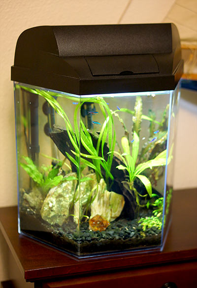 Marineland Five Gallon Hex Aquarium